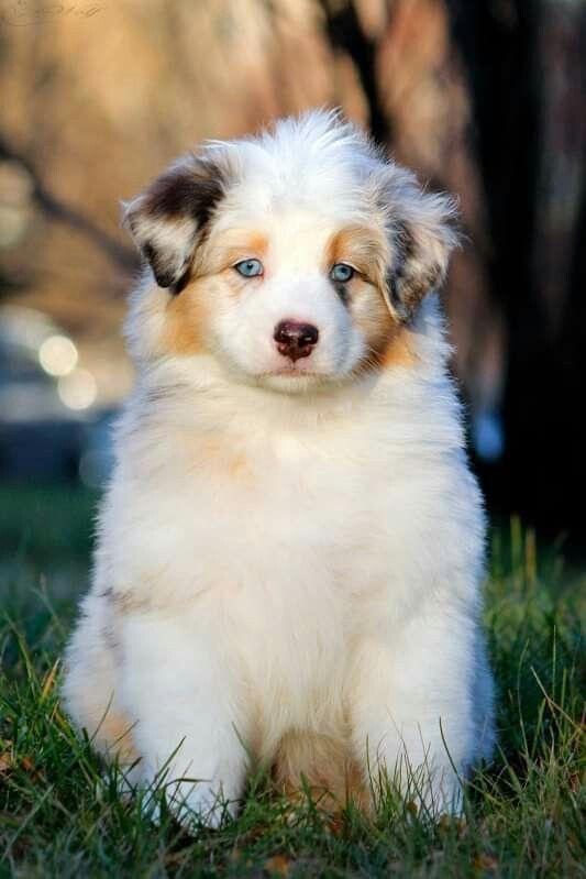 Wie Viele Hunderassen Gibt Es Und Wie Heißen Sie - Wie Viele Hunderassen Gibt Es Und Wie Heißen Sie