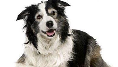 Wie Viele Hunderassen Gibt Es Weltweit 390x220 - Wie Viele Hunderassen Gibt Es Weltweit