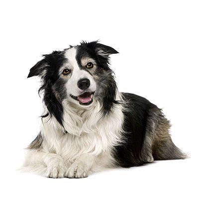 Wie Viele Hunderassen Gibt Es Weltweit - Wie Viele Hunderassen Gibt Es Weltweit