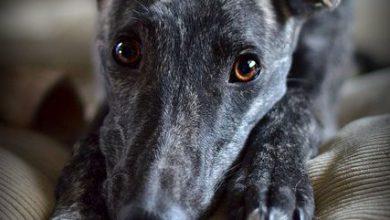 Witzige Bilder Hunde Für Whatsapp 390x220 - Witzige Bilder Hunde Für Whatsapp