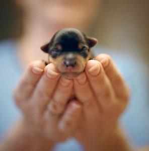 Witzige Bilder Hunde Kostenlos 296x300 - Witzige Bilder Hunde Kostenlos