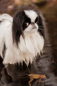Witzige Bilder Hunde Kostenlos Herunterladen 200x300 - Witzige Bilder Hunde Kostenlos Herunterladen