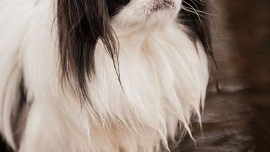 Witzige Bilder Hunde Kostenlos Herunterladen 390x220 - Witzige Bilder Hunde Kostenlos Herunterladen