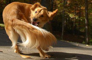 Witzige Hunde Bilder Für Facebook 300x198 - Witzige Hunde Bilder Für Facebook