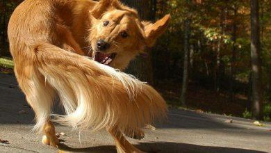 Witzige Hunde Bilder Für Facebook 390x220 - Witzige Hunde Bilder Für Facebook