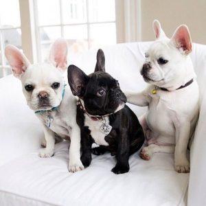 Witzige Hunde Bilder Kostenlos 300x300 - Witzige Hunde Bilder Kostenlos