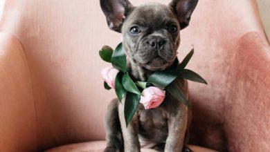 Witzige Hunde Bilder Kostenlos Herunterladen 390x220 - Witzige Hunde Bilder Kostenlos Herunterladen