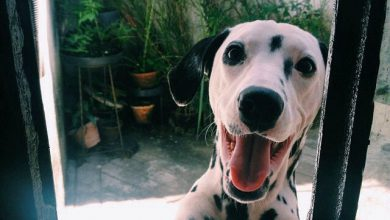 Witzige Hundebilder 390x220 - Witzige Hundebilder