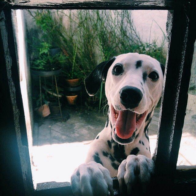Witzige Hundebilder - Witzige Hundebilder