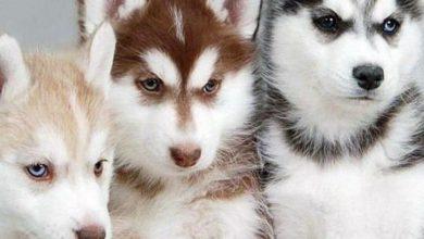 Wuschelhund Rasse 390x220 - Wuschelhund Rasse