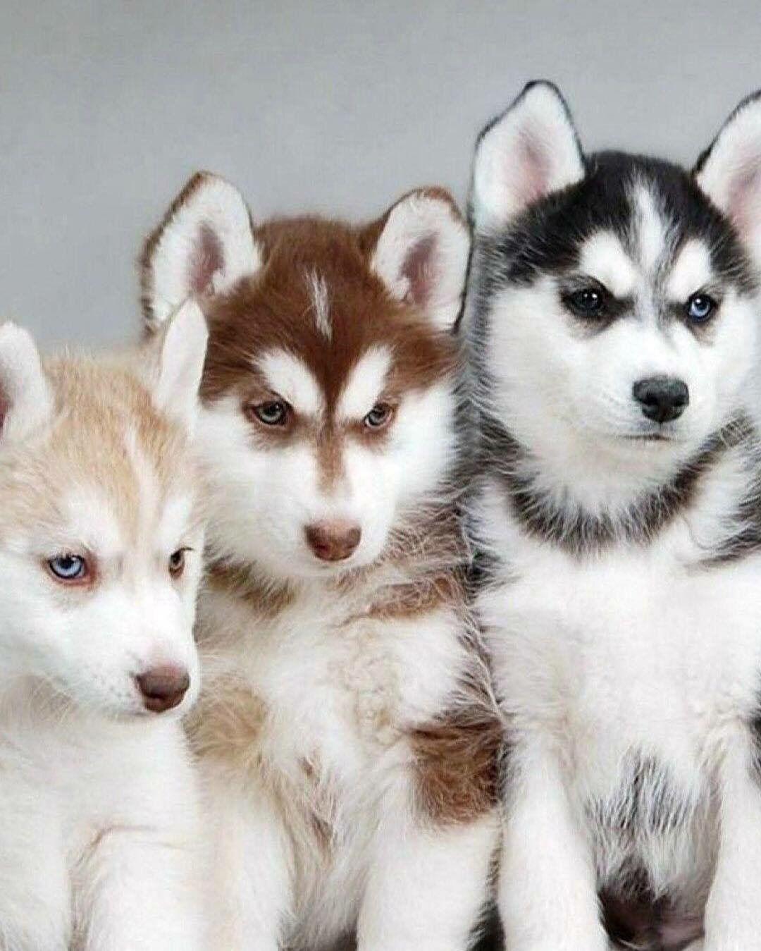 Wuschelhund Rasse - Wuschelhund Rasse
