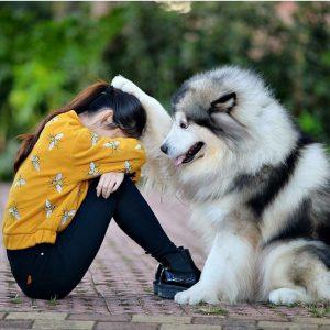 Zeig Mir Bilder Von Hundebabys Für Facebook 300x300 - Zeig Mir Bilder Von Hundebabys Für Facebook