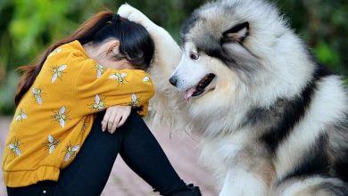Zeig Mir Bilder Von Hundebabys Für Facebook 390x220 - Zeig Mir Bilder Von Hundebabys Für Facebook