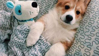 Zeig Mir Bilder Von Hunden 390x220 - Zeig Mir Bilder Von Hunden