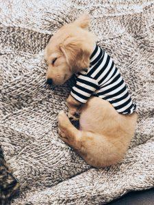 Zeig Mir Bilder Von Hunden Für Facebook 225x300 - Zeig Mir Bilder Von Hunden Für Facebook
