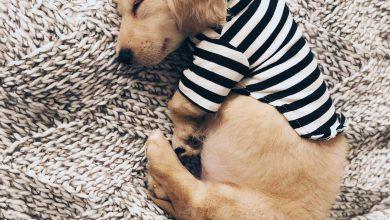 Zeig Mir Bilder Von Hunden Für Facebook 390x220 - Zeig Mir Bilder Von Hunden Für Facebook