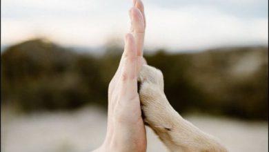 Zeig Mir Bilder Von Hunden Kostenlos 390x220 - Zeig Mir Bilder Von Hunden Kostenlos