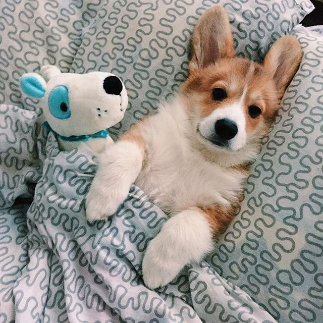 Zeig Mir Bilder Von Hunden - Zeig Mir Bilder Von Hunden