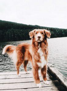 Zeig Mir Hunde 219x300 - Zeig Mir Hunde