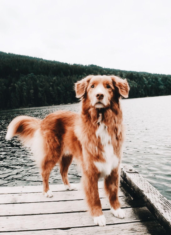 Zeig Mir Hunde - Zeig Mir Hunde