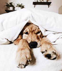 Zeig Mir Hundebilder Für Facebook 261x300 - Zeig Mir Hundebilder Für Facebook