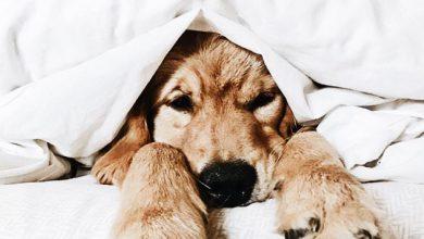 Zeig Mir Hundebilder Für Facebook 390x220 - Zeig Mir Hundebilder Für Facebook