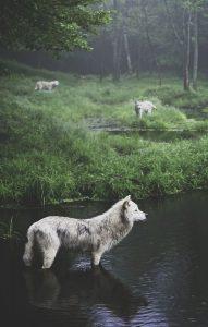 Zeig Mir Hundebilder Kostenlos 191x300 - Zeig Mir Hundebilder Kostenlos